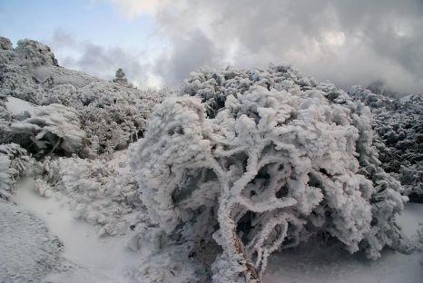 「屋久島 冬」の画像検索結果