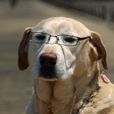 「不機嫌 犬」の画像検索結果