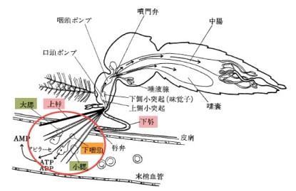 「蚊の針」の画像検索結果