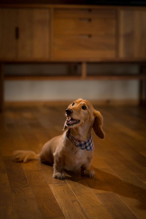 愛犬のお口が臭い? 4つのパターン_a0286340_15334946.jpg