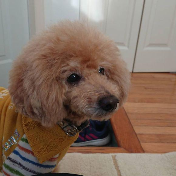 愛犬の健康寿命をサポートするマッサージ_a0286340_23261604.jpg