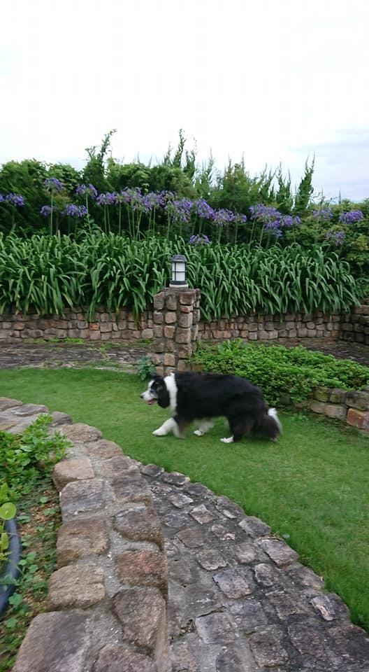 犬と泊まれるペンション モッキングバード_a0286340_11272023.jpg