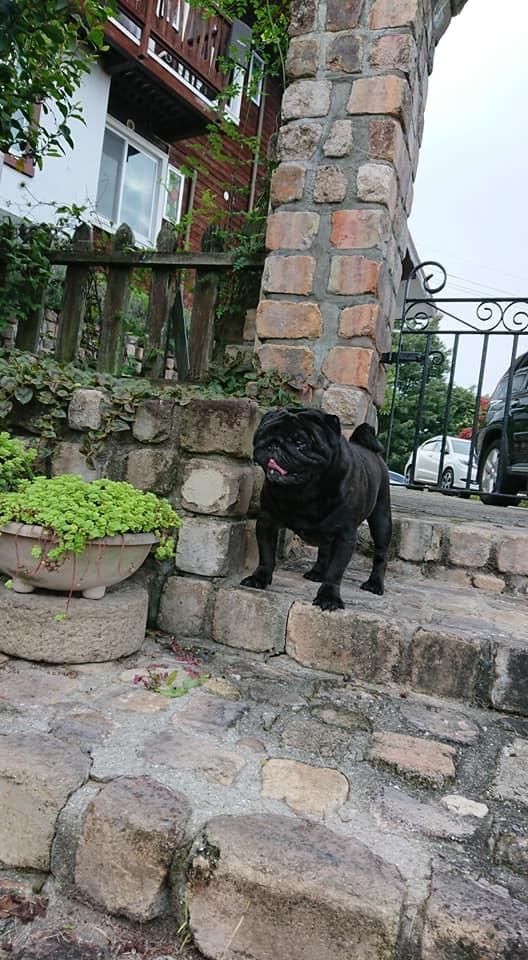 犬と泊まれるペンション モッキングバード_a0286340_11273288.jpg
