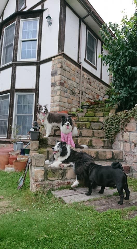 犬と泊まれるペンション モッキングバード_a0286340_11284800.jpg