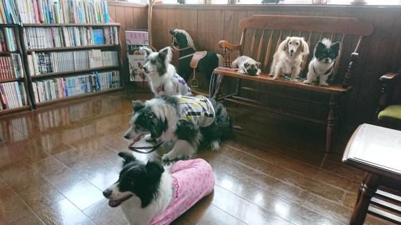 犬と泊まれるペンション モッキングバード_a0286340_11345862.jpg