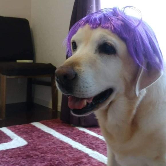 シニアの大型犬 ルーアちゃんのマッサージ_a0286340_22425462.jpg