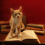 A Psychic with Catitude and other New Releases