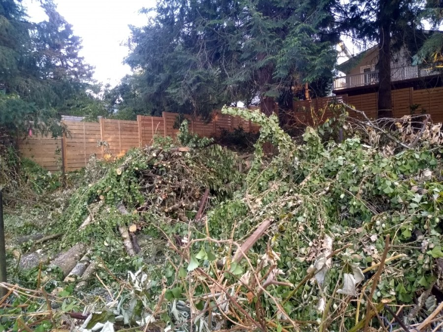 Brush Clearing Services