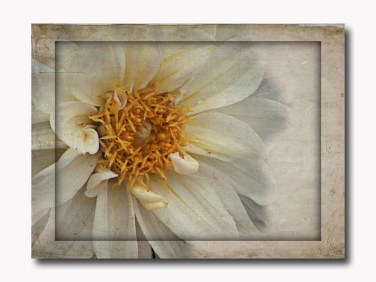 yellowdahlia texture w frame copy