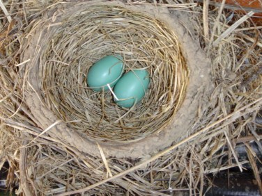 Two Eggs & then 4 by 4-27-13