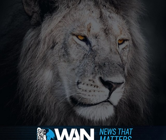 World Animal News Brings You The Latest In Breaking Animal News Innovative Pet Products Animal Charity Campaigns Legislation And Celebrity Related
