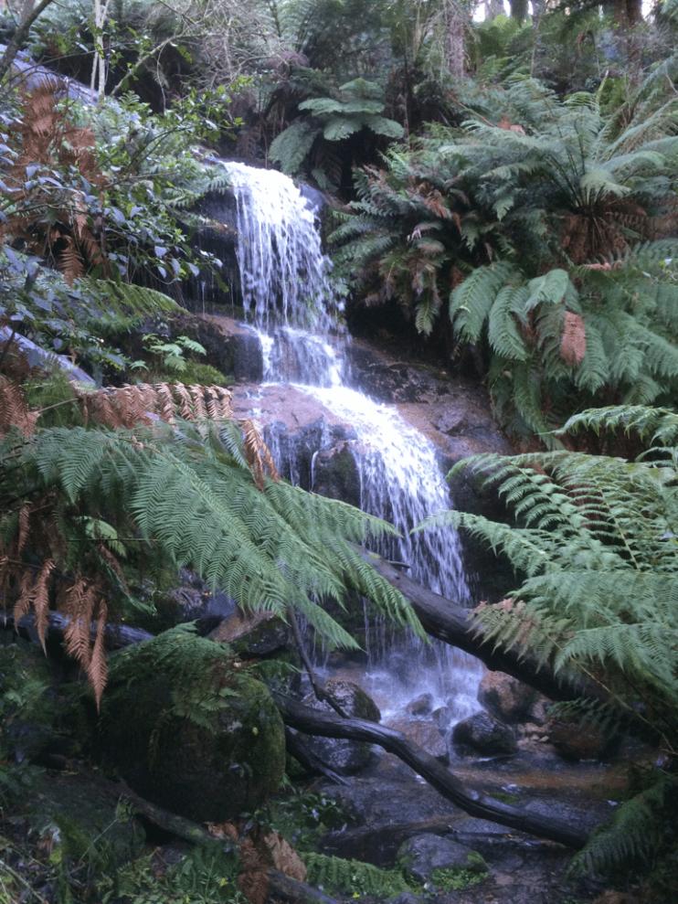 Ferntree Falls