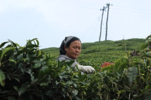 Sarita Aunty, a worker at the Gopaldhara Tea Estate