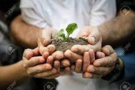 many hands support a seedling