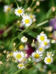 White & Yellow Flowers