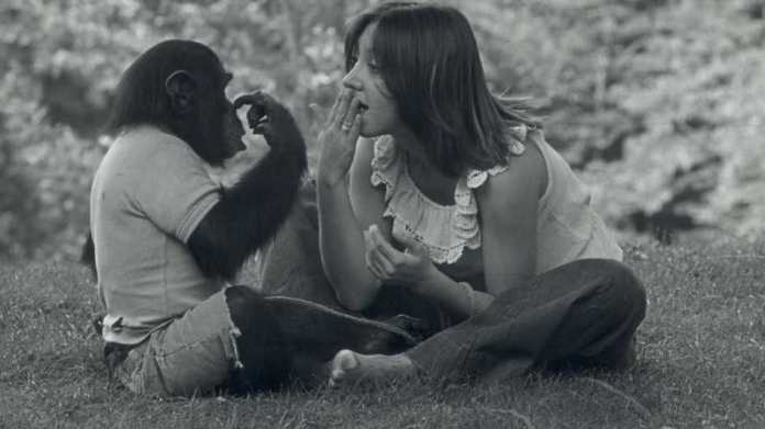 More Than Just Apes