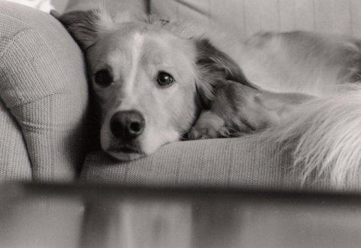 couch-puppy-1518738-638x437
