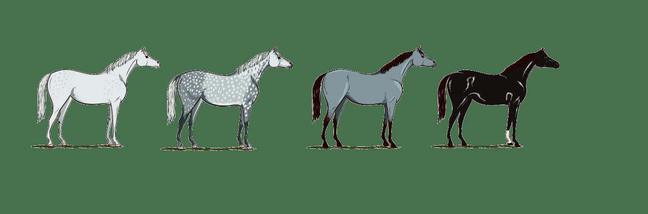 pferdefarben-weiss