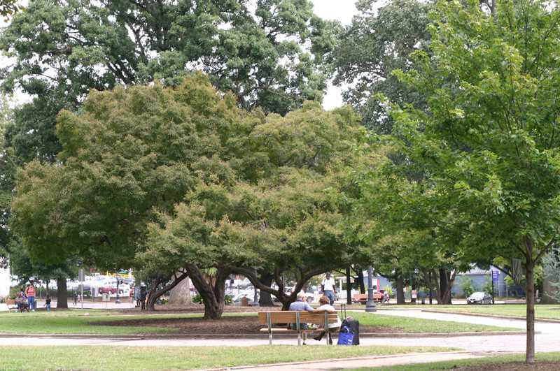 wide shot of two people sitting on a park bench at Moore Square
