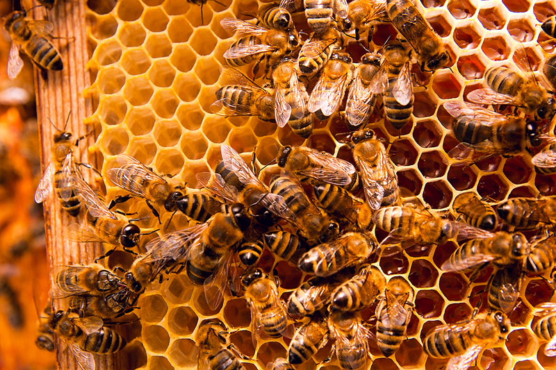 Healing Gifts from the Honey Bee