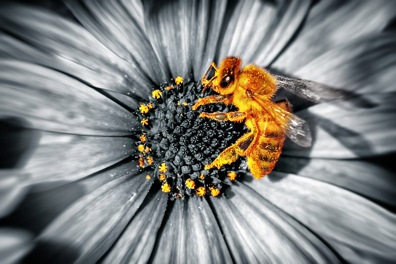 The Healing Power of the Bees for Endometriosis