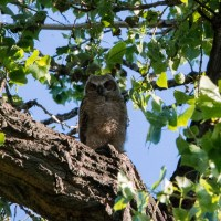 Finding Owls and Community