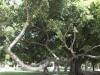 Armer schwacher Baum