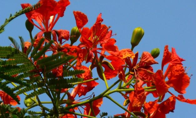 Thriveni C Mysore – Two Poems