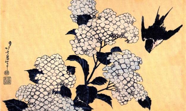 Seth Jani – Five Poems