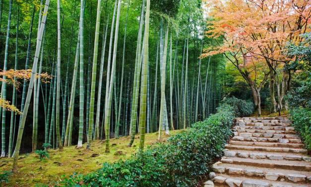 Tree Riesener – Four Poems
