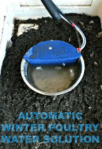 No Freeze, No Fuss, Automatic Poultry Waterer