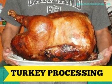 Turkey Processing
