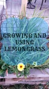 Growing and Using Lemongrass