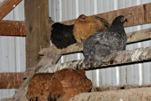 Establishing new pecking order