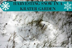 Harvesting Snow in a Krater Garden