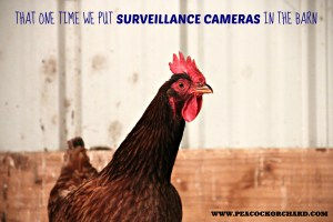 That one time we put security cameras in the barn......