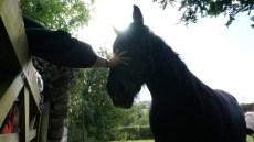 Saying hello to Morag Colquhoun's horse