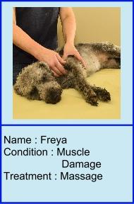 Freya_icon