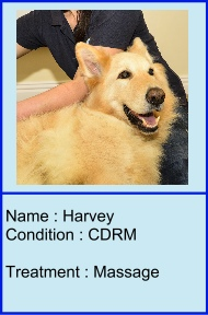 Harvey_icon