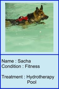 Sacha_icon