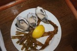 Gallway oysters - very tasty