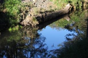 Platypus pool