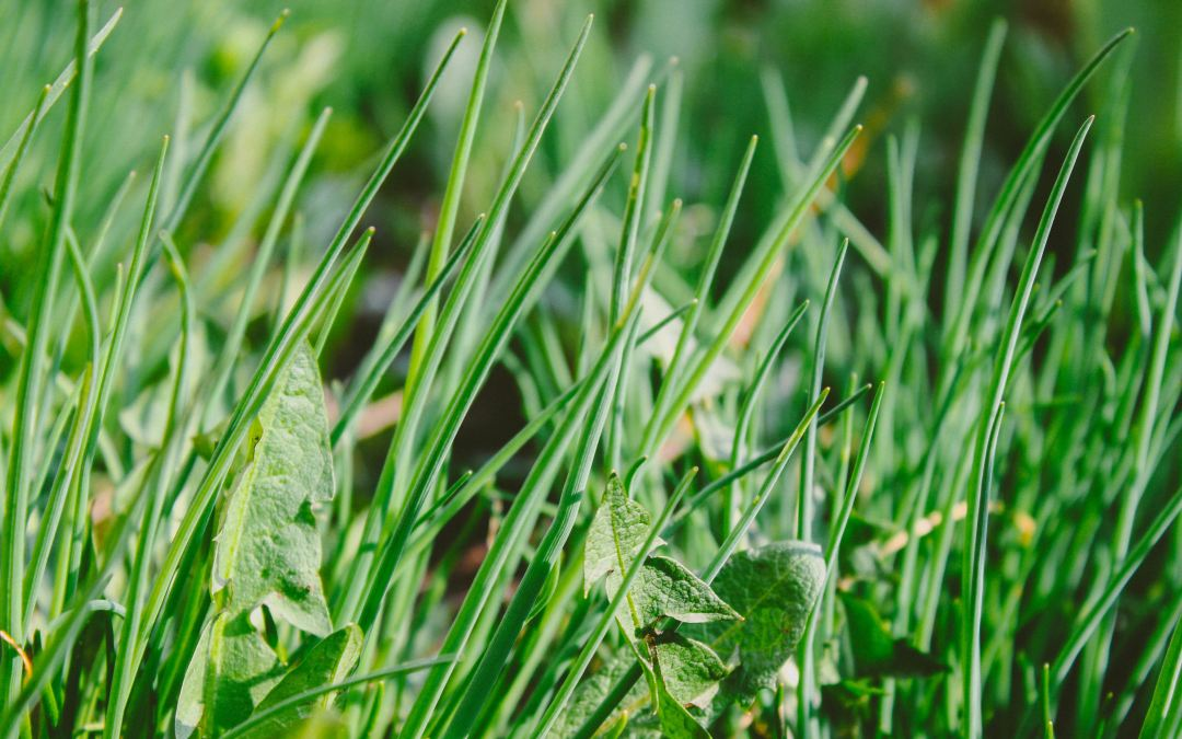 Quick Tip – Is It That Time For Weed Control?