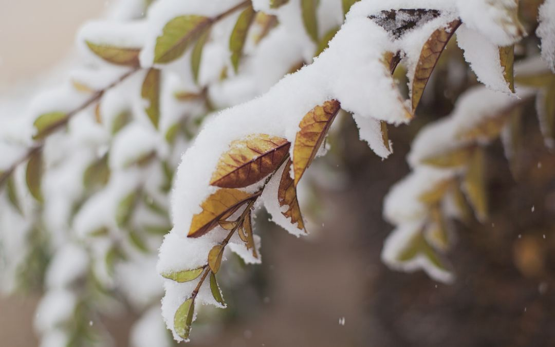 How to Painlessly Prep Your Yard for Winter