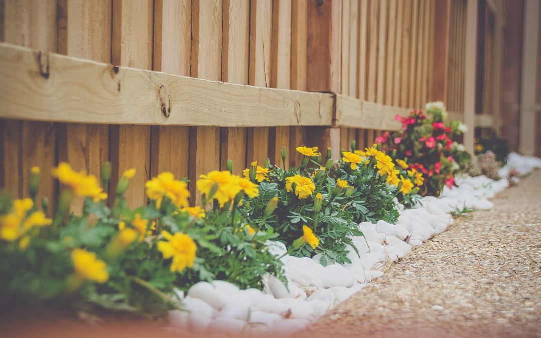 7 Simple Lawn & Landscape Tips for July