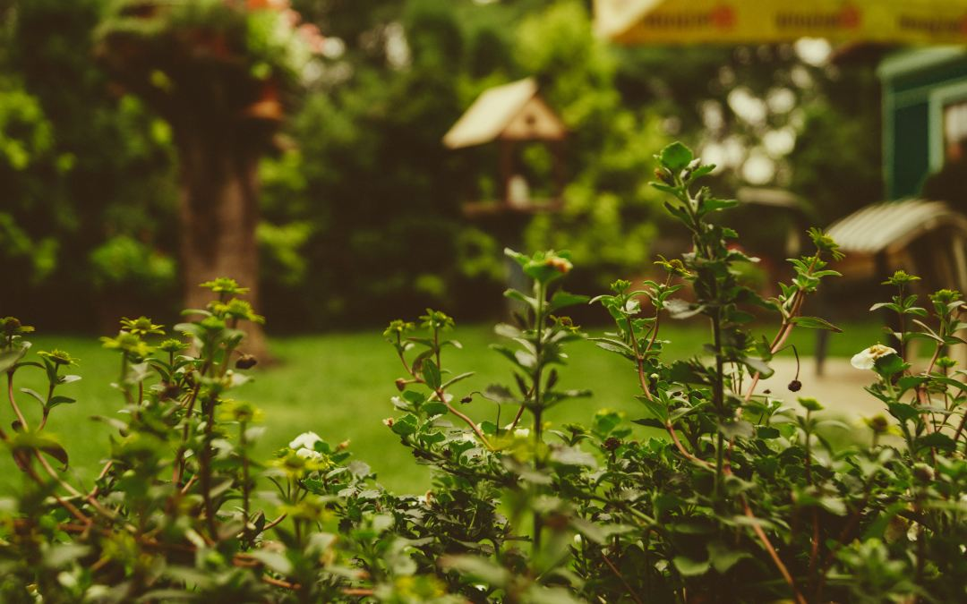 5 Mosquito Prevention Tips