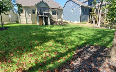 Your Guide to Zoysia in Holly Springs