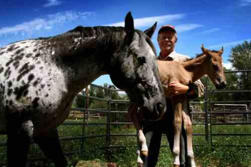 A new foal arrives at Linn Canyon Ranch