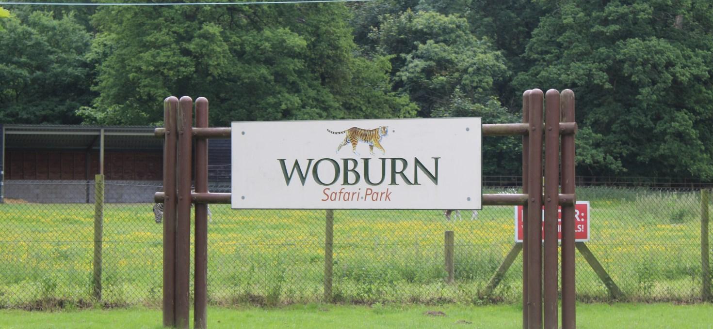 We went wild at Woburn!