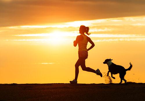 Dog trainability and exercise
